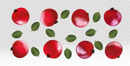 Set of red currant with leaves on transparent background. Fresh red currant fruits are whole. Useful ripe fresh red currant rich in vitamins, natural product. Realistic vector illustration.