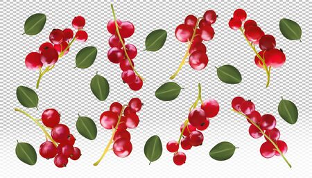 Realistic red currant berry transparent background. Different berry are whole. Freshly picked red currant with green leaf. Natural product. 3d vector illustration.