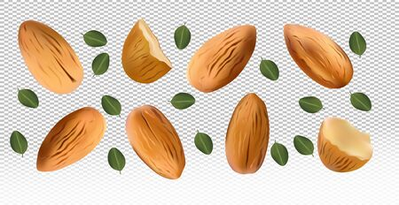 Almonds nuts with green leaf on transparent background. Almond flying from different angles. 3D realistic nuts rich in vitamins. Natural product. Vector illustration. Stock Illustratie