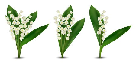 3d realistic Lilly of the valley flowers. Fragrant lily of the valley on white background. Bunch flower. Set vector illustration.