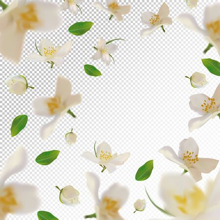 3D realistic jasmine with green leaf. White jasmine flower in motion. Beautiful jasmine background. Falling flower jasmine. Vector illustration. Vector illustration.
