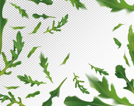 Arugula leaves background. Flying green ruccola on transparent background. Fresh arugula falling from different angles. Vector illustration.