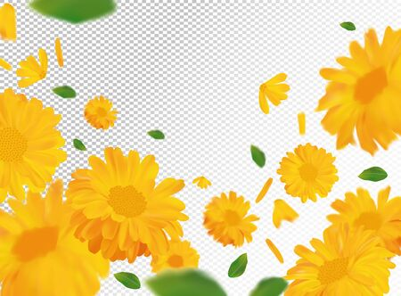 3D realistic marigold with green leaf. Yellow calendula flower in motion. Beautiful marigold background. Calendula close up. Falling flower calendula.Vector illustration Stock Illustratie