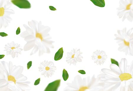 3D realistic chamomile with green leaf. White chamomile in motion. Beautiful flower background. Chamomile close up. Falling flower chamomile. Vector illustration Stock Illustratie