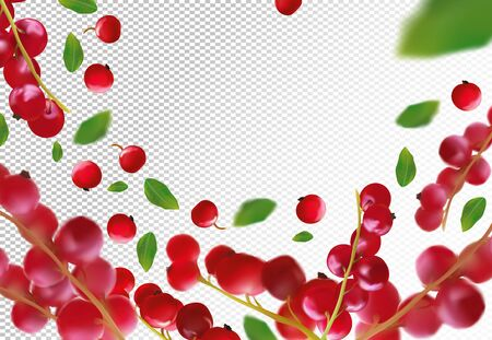 Realistic red currant berry on transparent background. Motion freshly picked red currant with green leaf.Red currant berry background. Natural product. 3d vector illustration