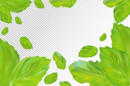 Mint leaves background. Flying green mint on transparent background. Aromatic fresh mint in motion. Packing design of tea. Vector illustration