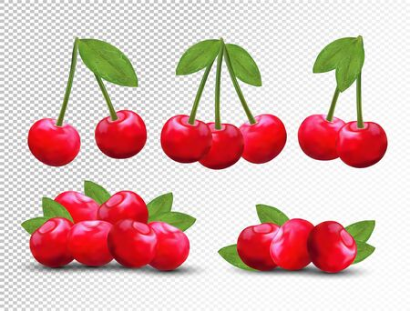 Collection ripe fresh cherry with green leaves on transparent background. 3D realistic fruits. Nature product. Vector illustration. Stock Illustratie
