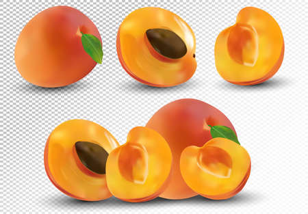 Set of apricot are whole and cut in half. Fresh fruit apricot on transparent background. 3d realistic apricot from different angles. Nature product. Vector illustration. Ilustrace