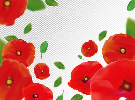 3D realistic red poppies with green leaf. Red poppies flower in motion. Wild red poppies background. Falling flower red poppies. Vector illustration