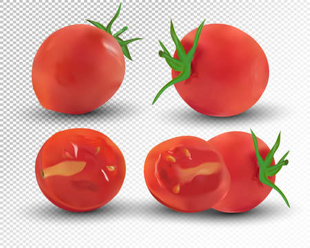 Collection red of tomato are whole and cut in half. Fresh tomato on transparent background. 3d realistic tomato from different angles. Nature product. Vector illustration.