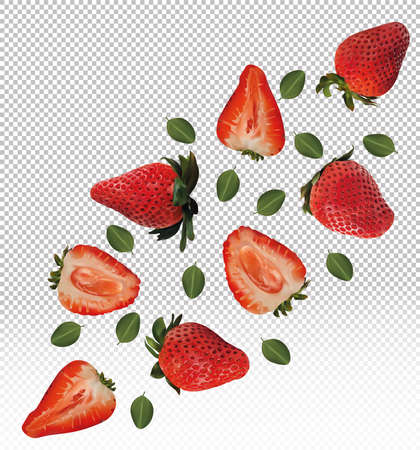 Set of strawberries with leaves on transparent background. Strawberry fruits are whole and cut in half. Useful ripe fresh strawberries rich in vitamins, natural product. Realistic vector illustration
