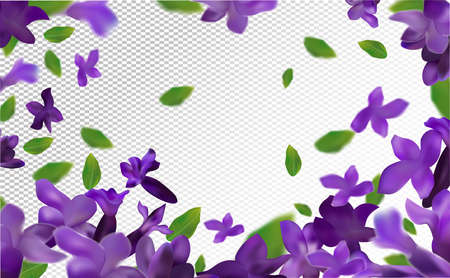 Lavender background. Beautiful lavender with green leaf on transparent background. Violet flower lavender in motion. Flying flower. 3d vector illustration.