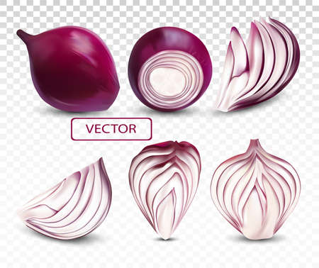Collection fresh red onion close up.Sliced, half, piece onion on transparent background. 3D realistic vector illustration. Ilustracja