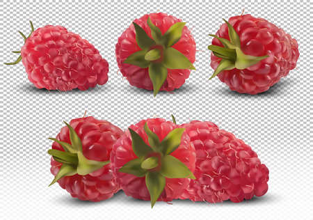 Set of raspberry from different angles on transparent background. Useful ripe fresh raspberry rich in vitamins, natural product. Realistic vector illustration