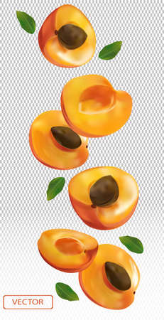 Apricot falling from different angles. Flying apricot with green leaf on transparent background. 3D realistic apricot. Vector illustration.