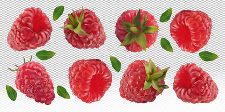 Raspberry falling from different angles. Flying raspberry with green leaf on transparent background. 3D realistic raspberry. Raspberry falling from different angles. Vector illustration Ilustracja