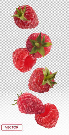 3D realistic raspberry on transparent background. Motion raspberry from different angles. Flying berries. Collection fresh raspberry. Detailed vector illustration