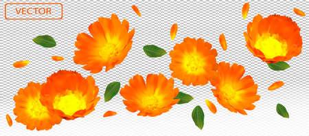 3D realistic marigold flower with green leaf. Yellow calendula flower in motion. Beautiful marigold background. Falling flower calendula. Vector illustration. Illusztráció