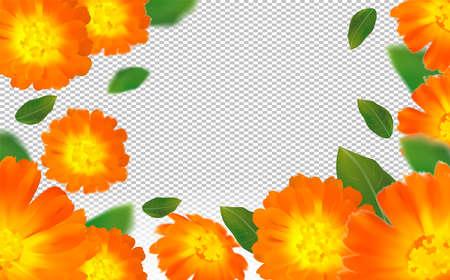 3d realistic calendula on transparent background. Flower marigold close up. Falling calendula flower from different angles. Flying calendula with green leaf. Medicine calendula. Vector illustration. Zdjęcie Seryjne - 154383991