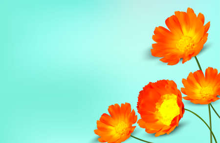 Minimal background with calendula flower and copy space for your text. 3D realistic yellow marigold flower on blue background. Banner. Vector illustration. Ilustracja