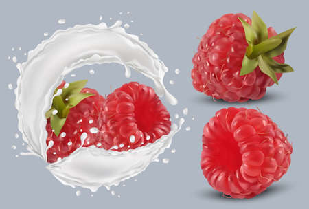 3D realistic raspberry in milk splash. Fresh red raspberry on transparent background. Milk cocktail. Organic berries.Vector illustration. Ilustracja
