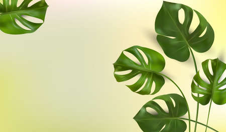 Background of tropical leaves on a green background, tropical foliage monstera with split-leaf foliage that grows in the wild. Banner for botany elements, health cosmetic products. Vector.