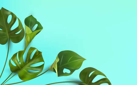 Background of tropical leaves on a blue background, tropical foliage monstera with split-leaf foliage that grows in the wild. Banner for botany elements, health cosmetic products. Vector