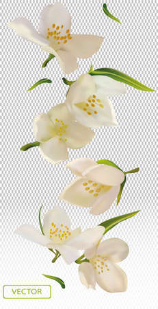 White flower jasmine with green leaf. Blooming jasmine, design for cosmetic product, tea, perfume, essential oil. Beautiful jasmine background. Banner for you health products. 3d vector illustration.