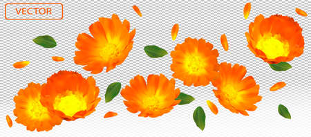 3D realistic marigold flower with green leaf. Yellow calendula flower in motion. Beautiful marigold background. Falling flower calendula. Vector illustration. Ilustracja