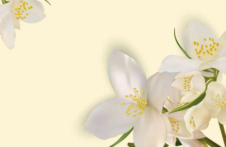 Beautiful jasmine background for your text or banner. White blooming jasmine. Banner for beauty product, perfume or medicine. 3d jasmine on yellow background. Vector illustration. Ilustracja