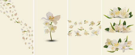 Beautiful Jasmine set for your text or banner. Collection of white blooming jasmine. Banner for beauty product, perfume or medicine. 3d jasmine on yellow background. Set vector illustration.