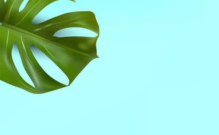 Minimal background with tropical leaf and copy space for your text. Realistic monstera with split-leaf foliage that grows in the wild. Banner for perfumes, cosmetic products, essential oil. Vector Zdjęcie Seryjne - 154384008