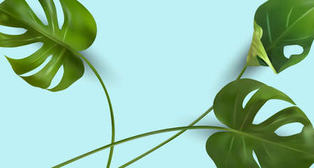 Minimal background with tropical leaf and copy space for your text. Realistic monstera with split-leaf foliage that grows in the wild. Banner for perfumes, cosmetic products, essential oil. Vector