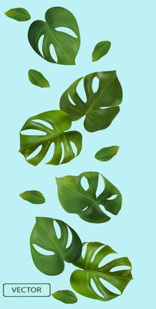 Tropical green leaves monstera on a blue background. Banner for perfumes, cosmetic products, medicine. 3d realistic monstera leaf. Vector illustration.