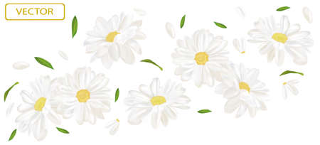 White flower chamomile with green leaf. Blooming chamomile, design for cosmetic product, tea, perfume, essential oil. Beautiful chamomile background. Banner for you health products. 3d vector. Zdjęcie Seryjne - 154528507