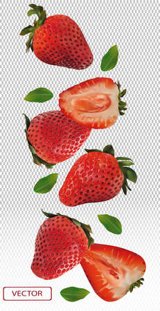 Realistic strawberry on transparent background. Whole strawberries, sliced strawberries with with green leaves. Illustration for your poster, banner, natural product. 3D vector illustration. Zdjęcie Seryjne - 154528510