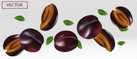 Realistic plum on transparent background. Whole plum, sliced plum with green leaves. Illustration for your poster, banner, natural product. 3D vector illustration. Zdjęcie Seryjne - 154528517
