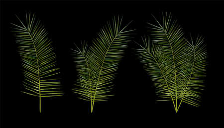 Tropical exotic leaf from different angles. 3D realistic green palm leaves on black background. Icon set. Vector illustration. Zdjęcie Seryjne - 154528550