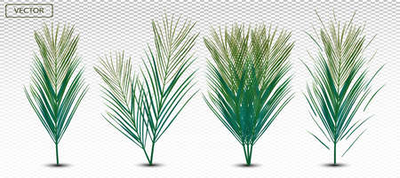 3d realistic green palm leaves. Tropical palm leaves isolated on transparent background. Leaves close up. Vector illustration.