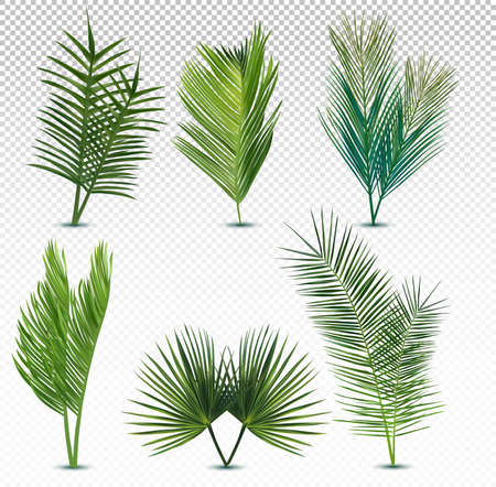 Big collection tropical exotic palm leaf. Different tropical palm leaves on transparent background. Summer leaf. Icon set. Vector illustration. Zdjęcie Seryjne - 154528577