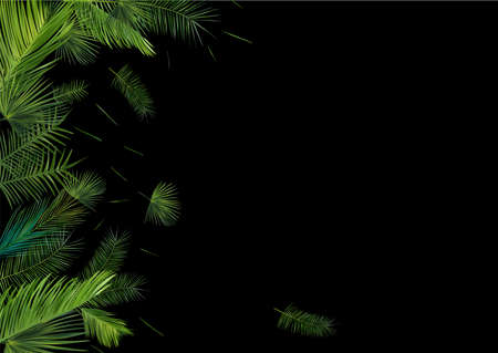 Collection tropical palm leaf on dark background. Beautiful banner. Exotic botanical design. Different palm palm leaves. 3D realistic leaves with copy space for your text. Vector illustration.