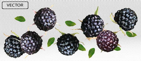 Blackberry from different angles. Whole black raspberry with green leaf on transparent background. Fresh summer berry. Illustration for your poster, banner, natural product. Vector illustration. Zdjęcie Seryjne - 154746814