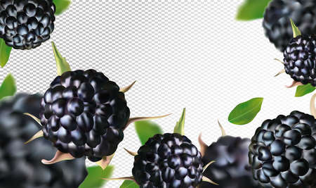 Fresh blackberry from different angles. Black raspberry berry rich in vitamins. Blackberry whole with green leaf on transparent background. Illustration for your poster, banner, natural product.Vector
