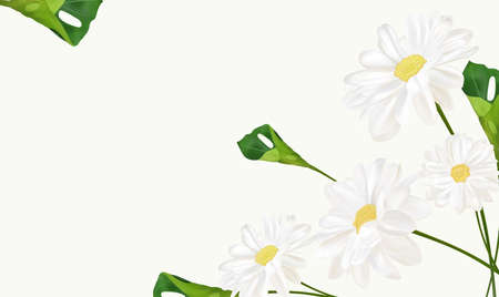 Beautiful chamomile background for your text or banner. White blooming chamomile. Banner for beauty product, perfume or medicine. 3d chamomile with green leaf on white background. Vector illustration.