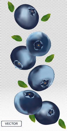 3D blueberry with green leaf. Juicy ripe berry blueberries on a transparent background. Fresh wild summer berry. Illustration for your poster, banner. Vector illustration Zdjęcie Seryjne - 154746825