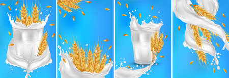 Wheat ears grains with splash milk or yogurt. Yellow whole stalks wheat, organic product, agriculture, healthy food. Illustration food packaging element illustration. Set realistic wheat ears. Vector 免版税图像