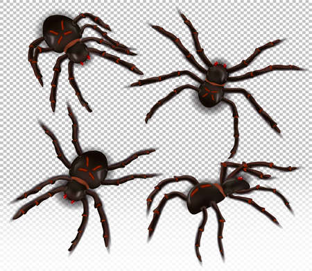 Wild realistic spider from different angles. Spiders on a transparent background. The Halloween characters. Vector illustration.