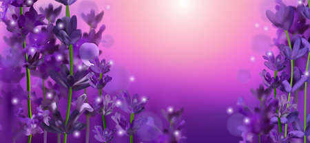 Blooming violet lavender field. Flowers lavender glitter over at sunlight. Panorama fragrance lavender field flowers.Illustration with for perfumery, health products, wedding.