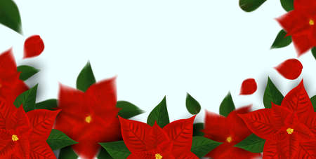 Red poinsettia flower symbol of winter holiday. Christmas flower with green leaf on white background with copy space for your text. Realistic vector illustration.