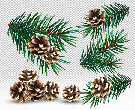 Set spruce branch and pine cone on transparent background. Christmas Green tree branches for your decor, banner, cards. Vector illustration.